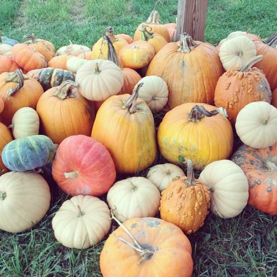 Healthy pumpkins